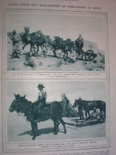 Photo article camel carts and mule sledges as ambulances in Egypt 1917 WW1