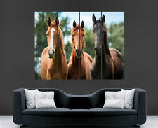 HORSES POSTER ANIMALS PRINT ART WALL LARGE IMAGE PICTURE
