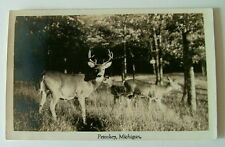 RPPC POSTCARD PETOSKEY MICHIGAN DEER GRAZING IN FOREST TREES MEADOW FIELD