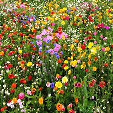 1 oz, APPROX 12,500 Seeds (Wild Flower Mix) Covers Approximately 125 square feet