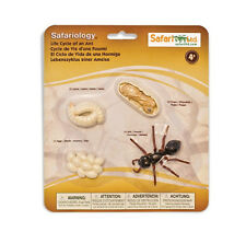Life Cycles of an ANT # 663916 ~ FREE SHIP in USA w/ $25+SAFARI,Ltd. Products