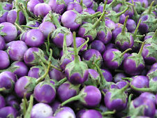 Thai Purple mini round eggplant 40++seeds Vegetable