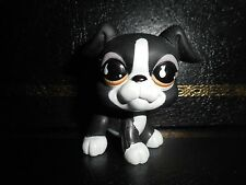 "Littlest Pet shop Chien Boxer Petshop Dog # 826 "" Very Good Condition """