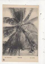 Congo Moanda Un Cocotier Vintage Postcard 967a