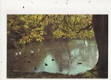 Cambourne Pond Isle Of Wight 1970 Postcard 787a