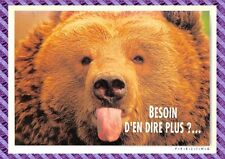 Carte Postale - Ours