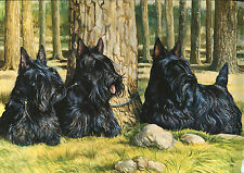 "SCOTTISH TERRIER SCOTTIE DOG ART LIMITED EDITION PRINT - ""3 Dogs In the Forest"""