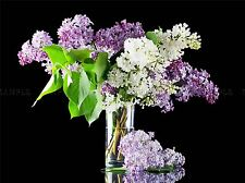 LILAC FLOWERS BLOOMS SPRING PHOTO ART PRINT POSTER PICTURE BMP775A