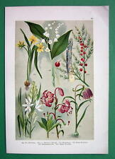 FIELD FLOWERS Star of Bethlehem Lily Daffodil !! COLOR Litho Print