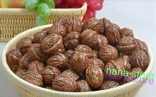 20PC Artificial Walnuts faux fruit fake food house faux decor Sketching tool new