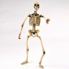 1:6 Scale Action Figure Skeleton Body Newest Movable Colllectible Bone Model Toy