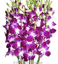 Fresh Flowers Delivery - Purple Dendrobium Cut Orchids