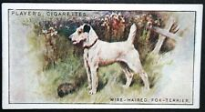 Wire-haired Fox Terrier   Original Vintage 1920's Colour Card # VGC