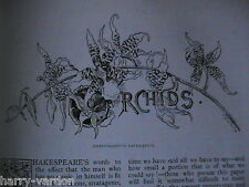 Orchids Orchi Orchid Orchidaceae Flower Antique Rare Old Victorian Article 1891