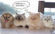 """Funny Cute Dog With Cat Animal Photo Fridge Magnet 2""""x3"""" Collectibles"""