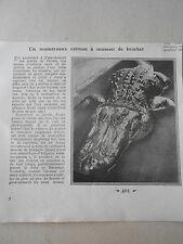 Un monstreux Caïman à museau de brochet coupure de presse 1926