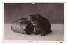 The Culprit - Kitten Real Photo Postcard 1907 / Cats