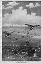 SEA BIRDS FOLLOWING A SCHOOL OF BLUEFISH IN THE GREAT SOUTH BAY SEAGULLS FISH