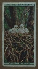 VINTAGE~WILLS~CIGARETTE~CARD~LIFE~IN~THE~TREE~TOPS~YOUNG~BUZZARDS~NUMBER~No~#~6