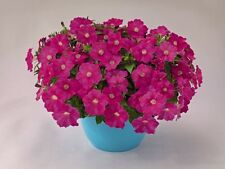 "Trailing Petunia Seeds Success Pink 25 Pelleted Seeds ""NEW"" true color"