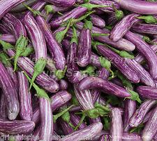 Aubergine gestreift 2-farbig mediterrane Küche  Rarität 15 frische Samen Balkon