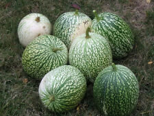 50 ROUND ZUCCHINI SUMMER SQUASH Vegetable Seeds + Gift