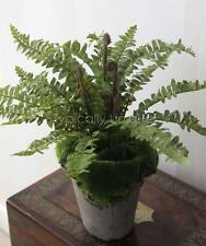"""GREEN BOSTON FERN ARTIFICIAL 12"""" RUSTIC POTTED PLANT ARRANGEMENT CONSERVATORY"""