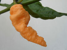 BHUT JOLOKIA PEACH pure seeds