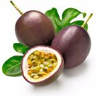 Tropical Exotic Passion Fruit Seeds Purple Passiflora edulis - Germination ± 95%