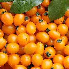 100pcs Super Sweet Grape Tomato Seeds Organic Golden Tiny Tomatoes Cherry Yellow