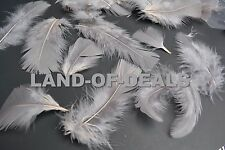 80+ Gray turkey feathers loose small body feathers plumage grey feather 0.5 oz