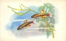 B27586 Poissons Fish Rusia