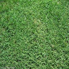 """Panama Bermuda Grass Seeds 2 Lbs """"ProTurf"""" Covers-1000 Sqft  (Bulk Seed Package)"""