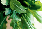 ROCKET *ORGANIC* 150 seeds salad vegetable garden herb salad EASY TO GROW