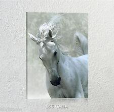 Cavallo bianco QUADRO MODERNO QUADRI ARREDAMENTO CASA ANIMALI HORSE STAMPA TELA