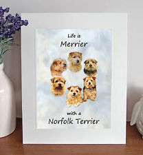 """Norfolk Terrier 'Life is Merrier' 10"""" x 8"""" Mounted Print Picture Image Fun Gift"""