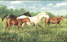 BEAUTIFUL COUNTRY HORSES & COLT PASTURE HORSE 10 1/4 WIDE Wallpaper bordeR Wall