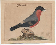 "19th Century Watercolor of Bird Possible Study for Bookplate "" Cifolotto Maschio"