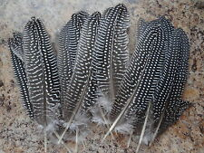 "Natural Spotted Guinea Quill Smudging Feather 6-7"" for Rituals Wiccan Pagan"