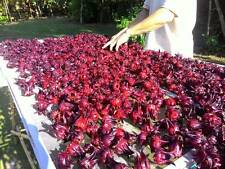 150 g Flower dry for tea Hibiscus sabdariffa,Jamaica sorrel, Roselle HERB THAI