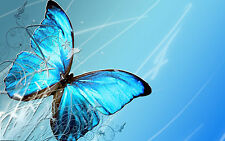 Framed Print - Blue/Teal Butterfly on a Wavy Blue Background(Picture Poster Art)