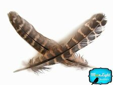 "Pheasant Feathers 1 Pack 4-6"" Ringneck Pheasant Wing Quill Feathers"