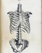 Vintage Medical Anatomical Anatomy Skeleton Illustration Real Canvas Art Print