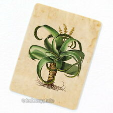 Aloe Vera Plant Deco Magnet, Decorative Fridge Refrigerator Antique Illustration