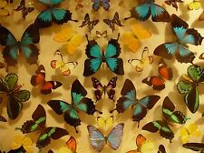 ABSTRACT SYMMETRY PATTERN BUTTERFLY INSECT POSTER ART PRINT HOME PICTURE BB314A
