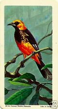 RED ROSE TEA CARD, SERIES: TROPICAL BIRDS, SPOT-BREASTED ORIOLE