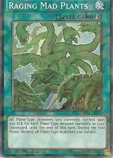 Yu-Gi-Oh: Raging Mad plantas-Inastillable Lámina Rara Edición-BP03-EN165 - 1st