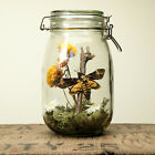 Glass Jar Terrarium Kit with Death Head Moth insect taxidermy