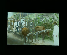 1890S HAND TINTED PHOTO ON GLASS OF WELL-DRESSED PEOPLE W/ OX - BARBADOS