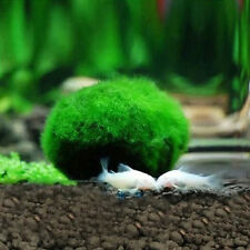 3-4cm Marimo Moss Balls Live Aquarium Plant Algae Fish Shrimp Tank Ornament